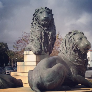 The Lions of San Marco Square- shopping and dining district