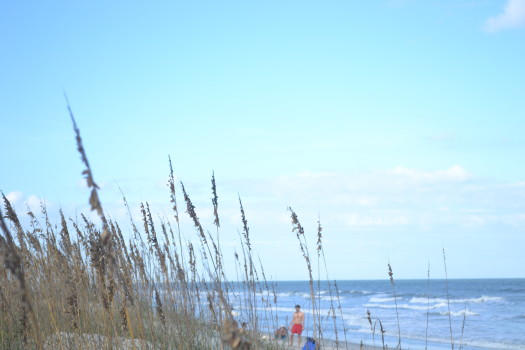 sea oats and ocean, just down the street from RW Wealth